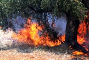Φωτιά σε λιοστάσι στο Βλοχό και…φάρσα για πυρκαγιά στη Μακρυνεία