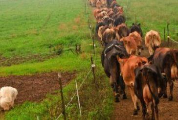 Κινδυνεύουν με απένταξη πάνω από τους μισούς βιοκτηνοτρόφους στην Αιτωλοακαρνανία