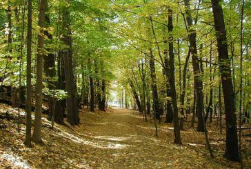 Ερώτηση για τη δασοπροστασία στο Δήμο Αγρινίου από τη Λαϊκή Συσπείρωση