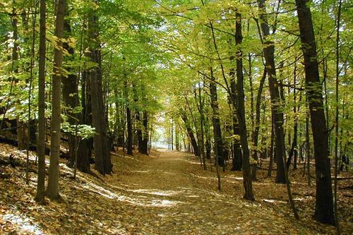 Θεσμοθετείται Εθνική Στρατηγική για τα Δάση