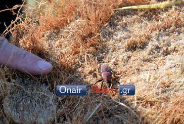 Μεσολόγγι: Πραγματοποιήθηκε η ενημερωτική ημερίδα για το κόκκινο σκαθάρι (φωτο-video)
