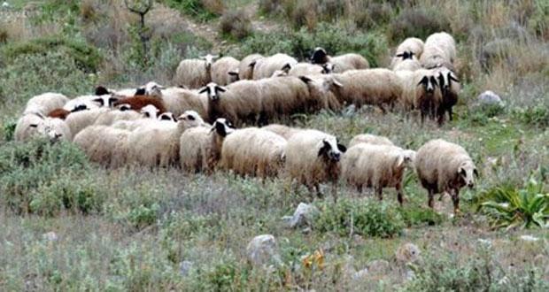 Περιφέρεια: Μέτρα προστασίας για τον κορωνοϊό κατά την απογραφή του ζωικού κεφαλαίου