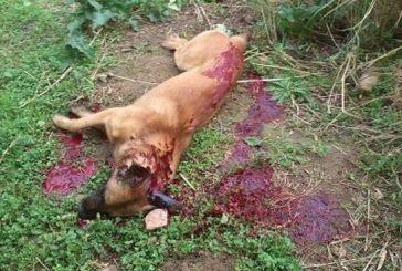10χρονος σκότωσε σκύλο με το όπλο του θείου του