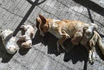 130 νεκρά ζώα στο κυνοκομείο Κοζάνης!