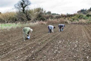 Γη σε αγρότες και κτηνοτρόφους με χαμηλό ενοίκιο