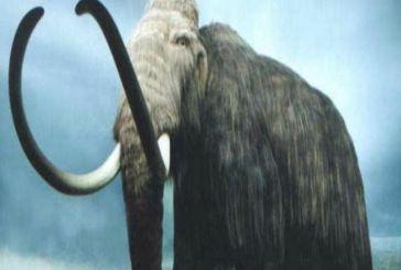 Αρχές 20ου αιώνα: Όταν αρχαιολόγοι εντόπισαν απολιθωμένο Μαμούθ στην Ορεινή Τριχωνίδα…