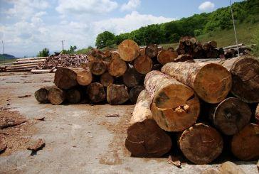 Ανακοίνωση της Δ/νσης Δασών Αιτωλοακαρνανίας για την αγοραπωλησία ξυλείας