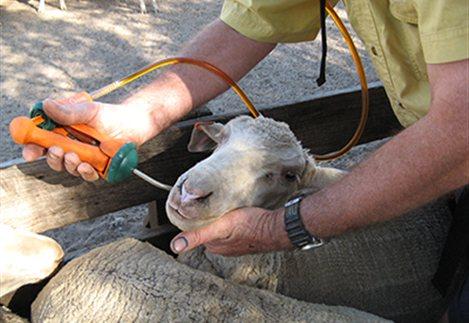 Δυτική Ελλάδα: ο θεσμός του κτηνιάτρου εκτροφής στο πρόγραμμα ελέγχου του μελιταίου πυρετού