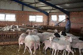 Αλλάζει το μοντέλο αδειοδότησης για τις κτηνοτροφικές εγκαταστάσεις