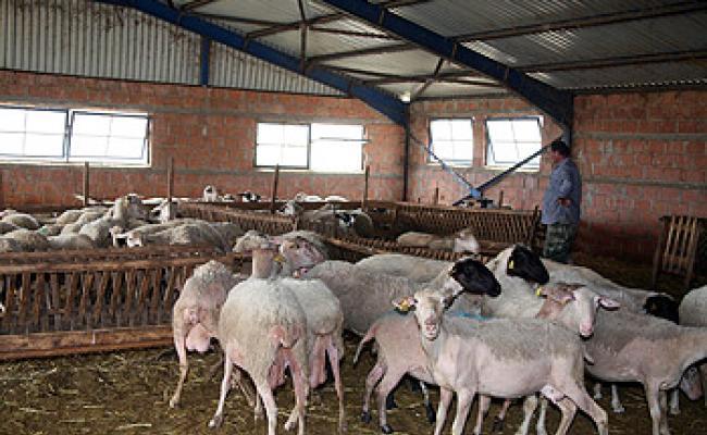 """250  φάκελοι κτηνοτρόφων """"παγωμένοι"""" στο Δασαρχείο Αμφιλοχίας"""