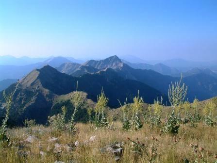 """ΒΟΥΝΟΚΟΡΦΗ ΠΛΑΤΑΝΙ - Η ΒΑΣΙΛΙΣΣΑ ΤΩΝ ΦΑΡΑΓΓΙΩΝ Η κορυφή Πλατάνι (1.779 μ. υψόμετρο), είναι η βασίλισσα των φαραγγιών, αφού από εδώ εκκινούν δύο παραπόταμοι του Ευήνου (Γιδομανδρίτης και Στρεψιανόρεμα) και ένας παραπόταμος του Κρικελοποτάμου (ρέμα Γρανά), κατά μήκος των φαραγγιών των οποίων σχηματίζονται στενές χαραδρώσεις σε πολλά σημεία, ενώ οι βόρειοι πρόποδες της κορυφής ακουμπούν στο φαράγγι του Κρικελοποτάμου και ένα τμήμα τους κάτω από τη Ροσκά, σε συνεργασία με τους πρόποδες της Καλιακούδας απέναντι, σχηματίζουν την πασίγνωστη χαράδρα """"Πανταβρέχι"""" στην Ευρυτανία. Πώς αλλιώς θα μπορούσε να χαρακτηριστεί αυτή η βουνοκορφή, αφού τα νερά που πηγάζουν από τις πλαγιές της έχουν σμιλέψει στο πέρασμα των χιλιετηρίδων τόσα σπουδαία φαράγγια τριγύρω της! Εδώ απεικονίζεται, ακριβώς μπροστά, ένα μέρος της στέψης της λεκάνης των πηγών Γιδομανδρίτη, όπως αυτή διακρίνεται από το Πλατάνι, η οποία σχηματίζεται από τις κορυφές Δίκορφο, Πλατάνι, Τσιμπλοβούνι και Άννινο - οι κορυφές που διακρίνονται στην εικόνα είναι το Τσιμπλοβούνι αριστερά και ο Άννινος στο κέντρο της εικόνας - και αποτελεί και το όριο της Αιτωλοακαρνανίας με την Ευρυτανία στην περιοχή αυτή. Το Πλατάνι είναι η δεύτερη ψηλότερη κορυφή στο ανατολικό τμήμα του Παναιτωλικού όρους και βρίσκεται στο βορειοανατολικό άκρο των ορίων του Δήμου Θέρμου με την Ευρυτανία, κοντά στις πηγές του Γιδομανδρίτη, στα όρια της Τοπικής Κοινότητας Κοκκινόβρυσης με τις Τοπικές Κοινότητες Ροσκάς και Μεσοκώμης του Δήμου Καρπενησίου. Η κορυφή προσεγγίζεται μέσω μονοπατιού που οδηγεί σ' αυτή από τον Άγιο Θεόδωρο (21 χμ. από Θέρμο μέσω της διαδρομής Θέρμο προς Αμπέλια - Κοκκινόβρυση), διερχόμενο κοντά από τις πηγές του Γιδομανδρίτη, ή μέσω πιο σύντομου μονοπατιού που ξεκινάει από τον δρόμο Κόνισκας - Μεσοκώμης λίγο πριν τη διασταύρωση προς Καρυά (31 χμ. από Θέρμο). (Φωτογραφία & περιγραφή: Κωστακόπουλος Νίκος)"""