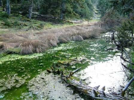 """ΠΕΛΑΓΑΚΙ - Η ΛΙΜΝΟΠΟΥΛΑ ΣΤΟ ΒΟΥΝΟ Η μικροσκοπική λίμνη ''Πελαγάκι'' στο ελατόδασος της Κοσίνας, μια υγρή ανάσα δροσιάς στο τραχύ και ξερό βουνίσιο περιβάλλον, φαντάζει με βροχοσταλίδα σταλμένη απ' τον ουρανό στον κορμό ενός διψασμένου κάκτου καταμεσής της ερήμου και ξαφνιάζει θετικά για το αρμονικό συνταίριασμα των εικόνων από διαφορετικά περιβάλλοντα που συναπαντώνται αναπάντεχα εδώ. Το Πελαγάκι το συναντάμε σε υψόμετρο 1.100 μέτρων περίπου, αμέσως μετά τον αυχένα """"Διάσελο Κοσίνας"""" λίγο πριν τα όρια της Τοπικής Κοινότητας Κοκκινόβρυσης με την Τοπική Κοινότητα Προδρόμου του Δήμου Καρπενησίου και προσεγγίζεται μέσω της διαδρομής από Κοκκινόβρυση προς Πρόδρομο Ευρυτανίας (30 χμ. από Θέρμο μέσω της κοντινότερης διαδρομής Θέρμο - Αμπέλια - Κοκκινόβρυση - Πρόδρομος, είτε 37 χμ. περίπου μέσω των εναλλακτικών διαδρομών που διέρχονται από Δρυμώνα ή από Αμβρακιά). (Φωτογραφία & περιγραφή: Κωστακόπουλος Νίκος)"""