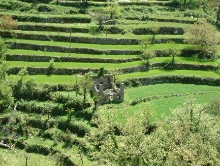ΤΑ ΚΟΥΡΒΟΥΛΑ - ΧΑΡΑΚΤΗΡΙΣΤΙΚΟ ΑΝΑΓΛΥΦΟ ΟΡΕΙΝΟΥ ΤΟΠΙΟΥ Τα Κούρβουλα Αμπελίων, μια αγροτική περιοχή μισοεγκαταλειμμένη σήμερα, αποτελούν ένα γιγαντιαίο ανάγλυφο ορεινού τοπίου, που καλύπτει μια ολόκληρη πλαγιά. Οι τεχνητές αναβαθμίδες (πεζούλες) διαμορφώνουν ένα από τα πλέον χαρακτηριστικά ανάγλυφα τοπίου της ορεινής υπαίθρου, ενώ τα διάσπαρτα πετρόχτιστα σπίτια και οι λοιπές ανθρωπογενείς παρεμβάσεις - σπίτια, καλύβες, στέρνες, αυλάκια, βρύσες, δρόμοι και άλλα - συνδιαμορφώνουν ένα εντυπωσιακό σκηνικό. Το ανάγλυφο, ίδιο με γιγαντιαίο σκαλωτό πύργο, ο οποίος είναι θεμελιωμένος στην ανατολική όχθη του Γιδομανδρίτη στο πρώτο τμήμα της Κοιλάδας των Νεράιδων και υποχωρώντας σταδιακά, σκαλί σκαλί αναφορικά με την καθετότητα στο επίπεδο θεμελίωσής του, καταλήγει λίγο πιο κάτω από την κορυφογραμμή του αντερείσματος του Αννίνου κοντά στην κορυφή Άγιος Αθανάσιος στεφανωμένος με το δάσος αριάς που ξεπροβάλλει ακριβώς από πάνω του.
