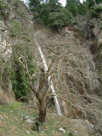ΠΗΓΕΣ ΓΙΔΟΜΑΝΔΡΙΤΗ - ΕΝΑ ΟΡΕΙΝΟ ΤΟΠΙΟ ΦΤΙΑΓΜΕΝΟ ΜΕ ΘΕΪΚΟ ΚΕΦΙ Οι Πηγές του Γιδομανδρίτη είναι ένα ορεινό τοπίο για τη δημιουργία του οποίου σίγουρα επιστρατεύτηκε πολύ μεράκι από το θεϊκό χέρι που το δούλεψε. Το πολυσύνθετο φυσικό κάλλος της περιοχής - όπως αυτό συντίθεται από τις χαραδρώσεις, τους γεωλογικούς σχηματισμούς, τους μικρούς σχετικά αλλά πανέμορφους καταρράκτες, τα νερά, τις βουνοκορφές, την ποικίλης μορφής βλάστηση και άλλα - την καθιστούν χωρίς υπερβολή μαγική. Εδώ απεικονίζεται ο καταρράκτης ''Σιαλπός'' στο ρέμα της Κρούνας που πηγάζει από την κορυφή Τσιμπλοβούνι. Καταρράκτες υπάρχουν και στο κεντρικό ρέμα στην περιοχή αυτή, το οποίο πηγάζει από την κορυφή Πλατάνι, όπως και στα κεντρικά ρέματα που συμβάλλουν στον Γιδομανδρίτη - Κοσινόρεμα, Φαράγγι του Δία και Κοσκινόρεμα - αλλά και σε άλλα μικρότερα ρέματα.