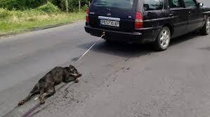"""""""Να καταγγέλλετε τέτοια περιστατικά""""  λέει η Αστυνομία με αφορμή βασανισμό σκύλου στο Αγρίνιο"""