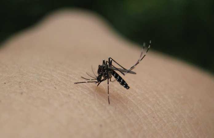 Συνάντηση ενημέρωσης κοινού στο Μεσολόγγι για την ελονοσία