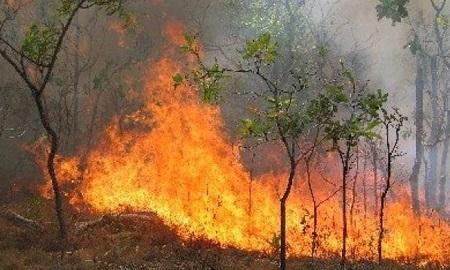 Φωτιά στο Βασιλόπουλο σε αγροτοδασική έκταση