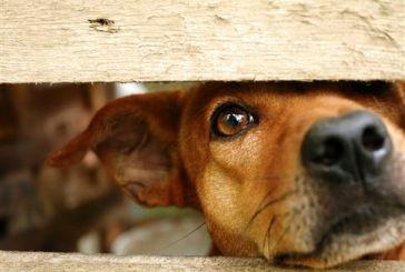 Αυξημένα και το 2016 τα περιστατικά κακοποίησης ή θανάτωσης ζώων