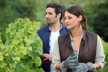 Nα ενταχθούν περισσότεροι νέοι αγρότες στο  ΠΑΑ  2014-2010 ζητούν οι βουλευτές ΣΥΡΙΖΑ