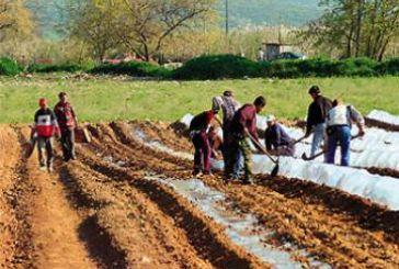 Ερώτηση ΚΚΕ για τις μειωμένες συντάξεις των αγροτών