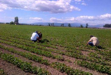 Έρευνα διάρθρωσης γεωργικών και κτηνοτροφικών εκμεταλλεύσεων από την ΕΛΣΤΑΤ