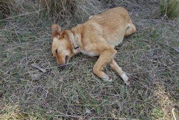 Τι αναφέρουν οι αστυνομικές αρχές για τα περιστατικά κακοποίησης ζώων
