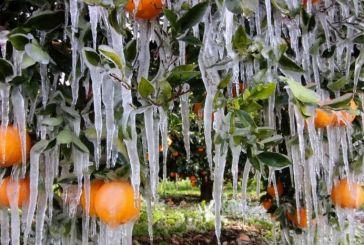 Πρόσθετες πληρωμές προκαταβολών για τον «Παγετό Άνοιξη 2021» 9,3 εκατ. €