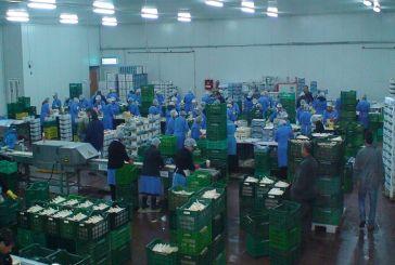 """Πρόσληψη εποχιακών εργατών στον Αγροτικό Συνεταιρισμό Σπαραγγιών """"ΑΧΕΛΩΟΣ"""""""