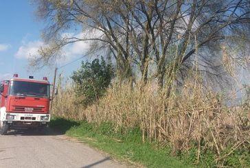 Φωτιές σε καλαμιές στον Πλάτανο Καλυβίων (φωτο)