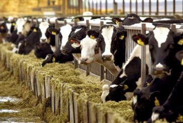 Στη Βουλή από Σαλμά οι καταγγελίες για τον έλεγχο από τον ΟΠΕΚΕΠΕ των βοοειδών της Λεπενούς
