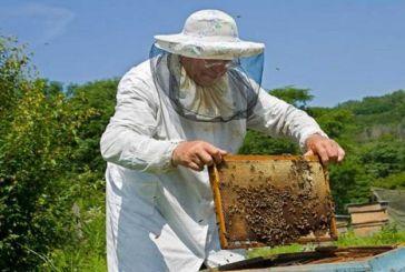 Τριήμερα σεμινάρια μελισσοκομίας στο Μεσολόγγι