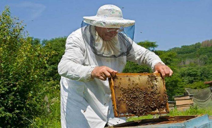 Σεμινάριο μελισσοκομίας στο Αγρίνιο