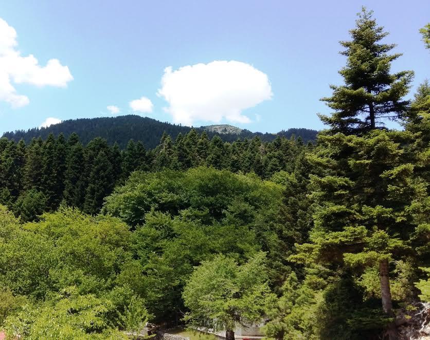 Δείγμα από τη φύση του ορεινού Θέρμου