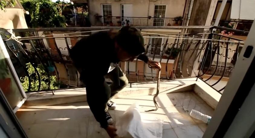 Αγρίνιο: φίδι στον τρίτο όροφο πολυκατοικίας