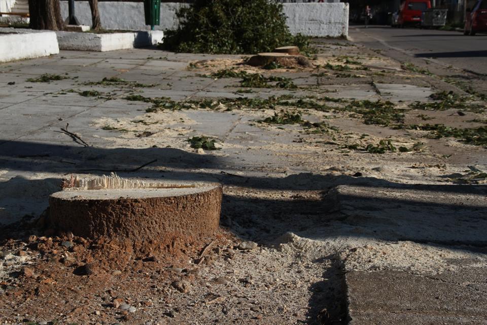 Αντικατάσταση δέντρων με… ασφαλτοτάπητα καταγγέλλει ο Τραπεζιώτης