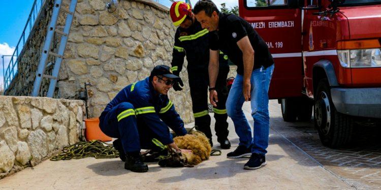 Λευκάδα: Επιχείρηση της πυροσβεστικής για τον απεγκλωβισμό προβάτου (φωτο)