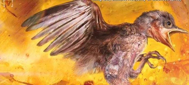 Εκπληκτική ανακάλυψη: Επιστήμονες βρήκαν αυτούσιο πτηνό 99 εκατ. ετών (φωτο & video)