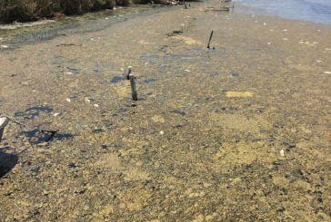 Καταγγέλλουν περιβαλλοντικό και οικονομικό έγκλημα στη λιμνοθάλασσα (φώτο και βίντεο)