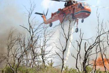Καίγεται ελατόδασος στην Ευρυτανία – Δίπλα από τις Κορυσχάδες
