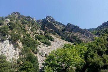 Με τη ρίζα… στον βράχο
