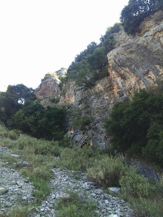 Ποικιλία βλάστησης στο βράχο και στα ριζά, στα βράχια της Χούνης