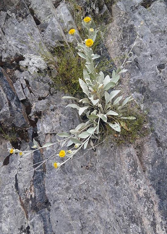 Και σ' αυτόν τον γρανιτένιο όγκο, στα βράχια της Χούνης, βρίσκει τόπο ν' ανθίσει το λουλούδι από τ' αγριοβότανο