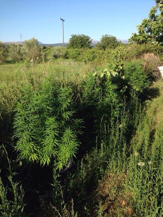 narkotika xorio amfilochia (3)