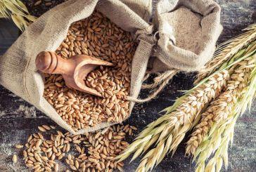 Τι έτρωγαν οι Αρχαίοι Έλληνες; – Τα μυστικά της ευζωίας τους