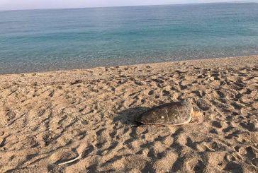 Λευκάδα: Άλλη μια νεκρή χελώνα Καρέτα-Καρέτα