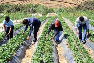 Ερευνα: Σ' αυτούς τους νομούς οι αγρότες εκμεταλλεύονται -εργασιακά- τους μετανάστες