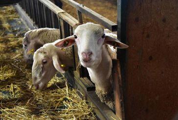 Νέα ΚΥΑ για τις κτηνοτροφικές εγκαταστάσεις