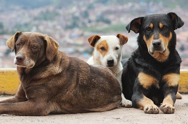 Δήμος Αγρινίου: Βεβαίωση μετακίνησης για τη σίτιση των αδέσποτων ζώων