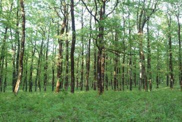 Εκπαιδευτική ημερίδα στη Σκουρτού με τίτλο «Δάση Βαλανιδιάς: το παράδειγμα του Ξηρομέρου»