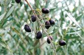 Ξεσηκωμός στο Μεσολόγγι για την τιμή της καλαμών – Μαζεύουν υπογραφές οι αγρότες